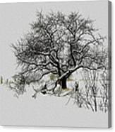 Winter Sentinel Canvas Print