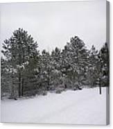Winter Slope Canvas Print