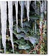 Winter Still Canvas Print