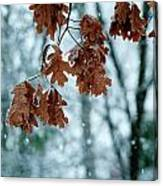 Winter Takes Hold Canvas Print
