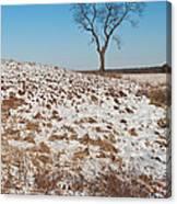 Winter Tree Nachusa Grasslands Canvas Print