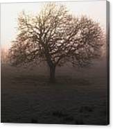 Winter Tree On A Frosty Morning, County Canvas Print