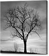 Winter Tree Silhouette Canvas Print