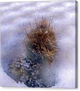 Winter Weed Canvas Print