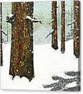 Wintering Pines Canvas Print