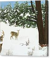 Wintering Whitetails Canvas Print