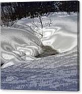 Winter's Satin Blanket Canvas Print