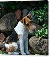 Wirehair Fox Terrier Canvas Print