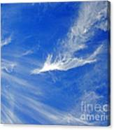 Wispy White Canvas Print