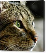 With Intense Focus Canvas Print