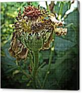 Withered Away Canvas Print