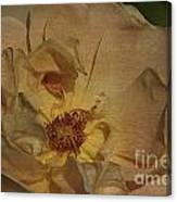 Withering Rose Canvas Print