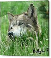 Wolf Laying In Grass Canvas Print