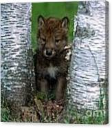 Wolf Pup Playing Peekaboo Canvas Print