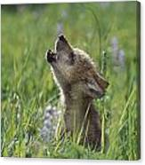 Wolf Puppy Howling In Mountain Meadow Canvas Print