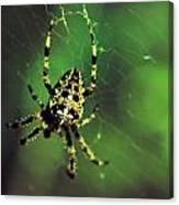 Wolf Spider  Canvas Print