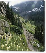 Woman Hiking On Sperry Chalet Trail Canvas Print