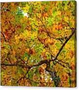 Wonder Cluster Canvas Print