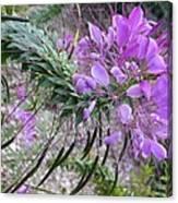 Wonder Flower Canvas Print