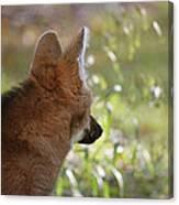 Wondering Wolf Canvas Print