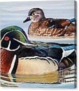 Wood Ducks Canvas Print