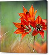Wood Lily Canvas Print