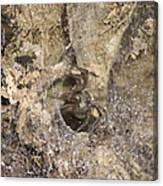 Wood Spider Canvas Print