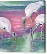 Wood Stork Family At Sunset Canvas Print