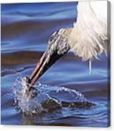 Wood Stork Fishing Canvas Print