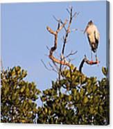 Wood Stork Out On A Limb Canvas Print