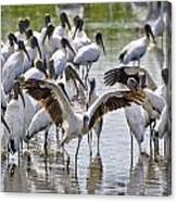 Wood Storks Canvas Print