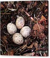 Woodcock Nest And Eggs Canvas Print