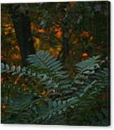 Wooded Dream  Canvas Print