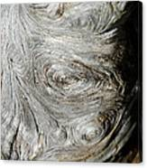 Wooden Fingerprint Eddies In The Grain Of An Old Log Like Whorls On A Finger Canvas Print