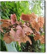 Wooden Hydrangea Canvas Print