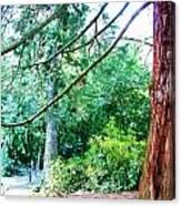 Woodland And Huge Tree Illustration Canvas Print