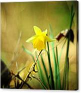 Woodland Narcissus Canvas Print