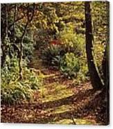 Woodland Path, Mount Stewart, Ards Canvas Print