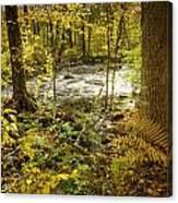 Woodland Scene Canvas Print