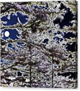 Woodland Solitude Canvas Print