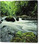 Woodland Stream And Rapids, Time Canvas Print