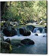 Woodland View Of A Small Creek Flowing Canvas Print