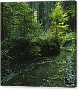 Woodland View With Stream Canvas Print