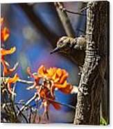 Woodpecker Listening Canvas Print