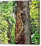 Woodpecker Tree Canvas Print