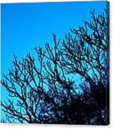 Woods And Sky Canvas Print