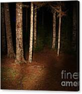 Woods At Night Canvas Print