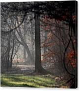 Woods - Dirt Road Photo - The Quiet Place Canvas Print