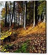 Woods During Autumn Canvas Print