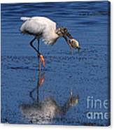 Woodstork Catches Fish Canvas Print